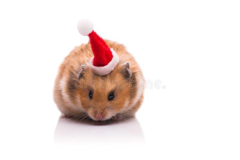 Le hamster mignon avec le chapeau de Santa d'isolement sur le blanc photos libres de droits
