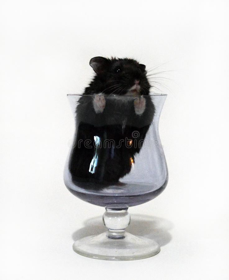 Le hamster regarde hors du gobelet photo stock