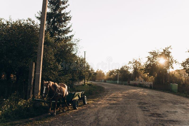 Le harnais de cheval retient dans le chariot dans la route de village près des maisons à b photos libres de droits