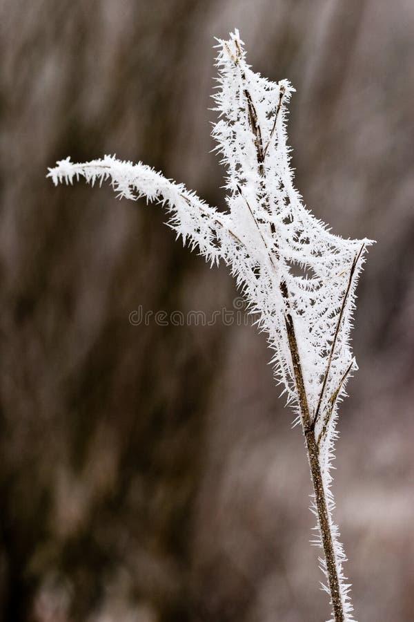 Le hoar de gel de jour plante l hiver doux de givre