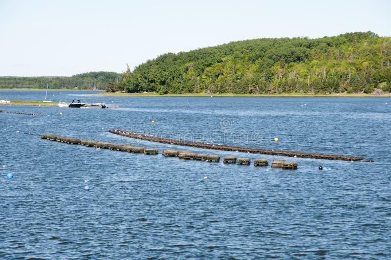 Le homard emprisonne - prince Edward Island - le Canada image stock