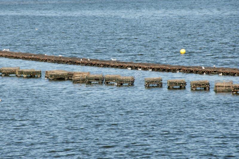 Le homard emprisonne - prince Edward Island - le Canada photo libre de droits