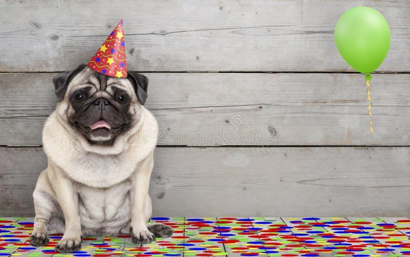 Le hunden för mops för födelsedagparti, med konfettier och ballongen som sitter ner att fira, på gammal träbackgrond arkivbilder