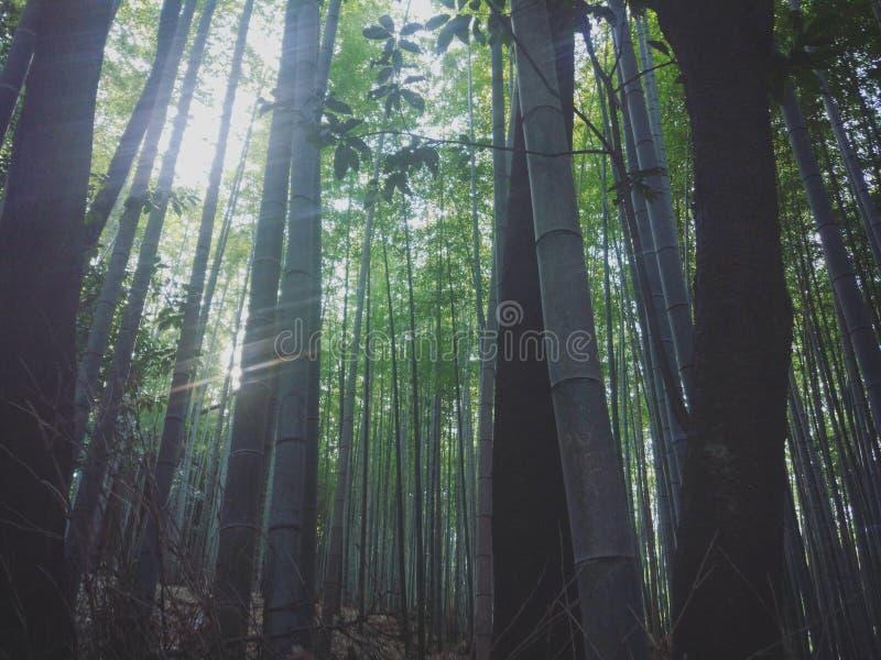Le Japon Kyoto image stock