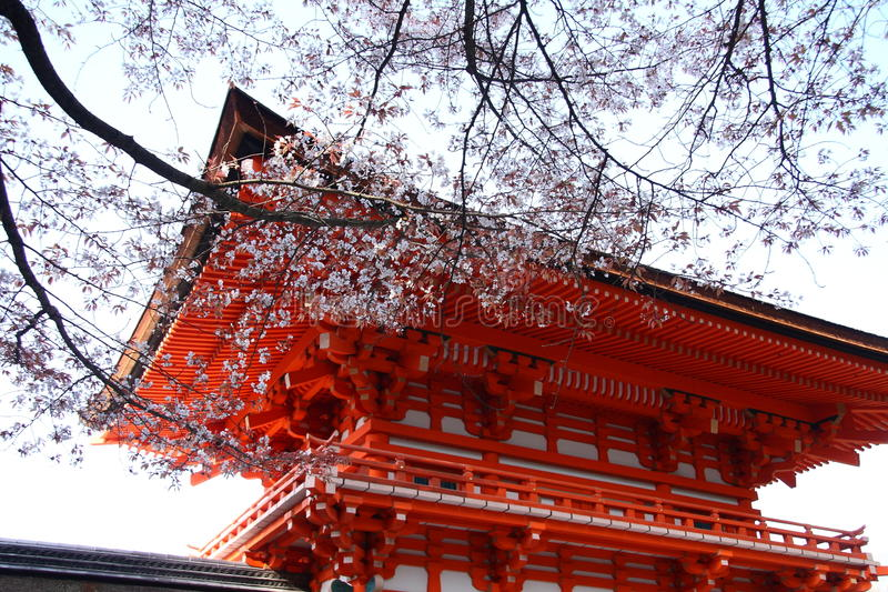 Le Japon Sakura photo stock