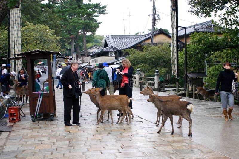 Le Japon : Stationnement de Nara photos stock