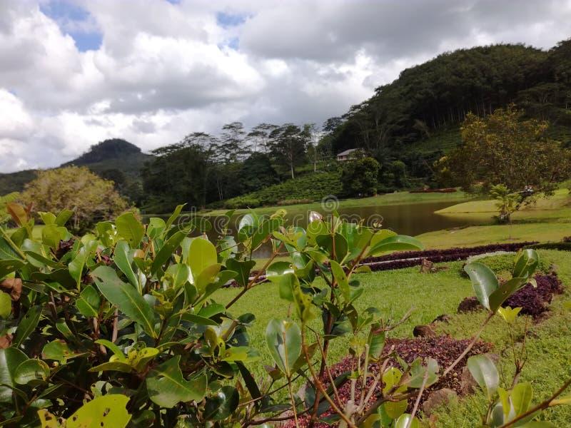 Le jardin consistent avec l'étang naturel photo stock