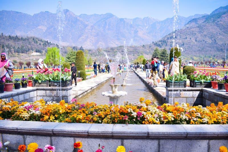 Le jardin d'Indira Gandhi Memorial Tulip, modèlent précédemment Floriculture Center, est un jardin de tulipe à Srinagar, Cachemir photos libres de droits