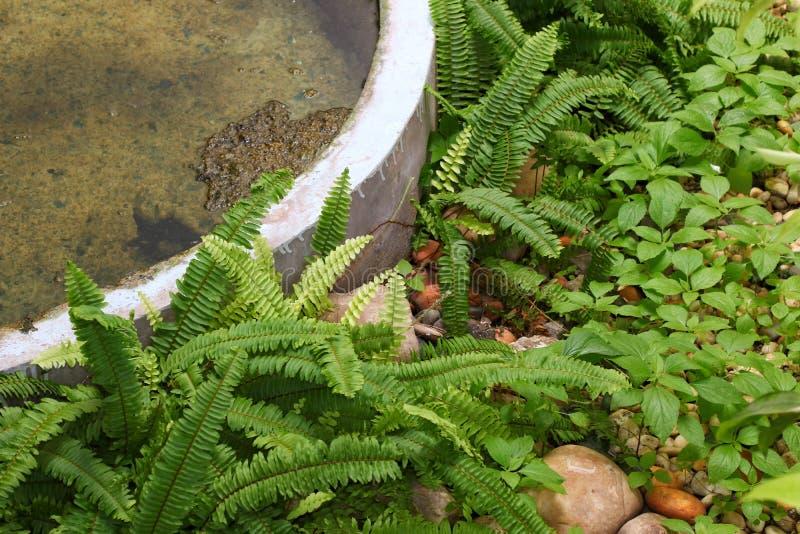Et FougèreLa De Le Jardin Belle Nature Fougère Vert Yby6gmI7fv