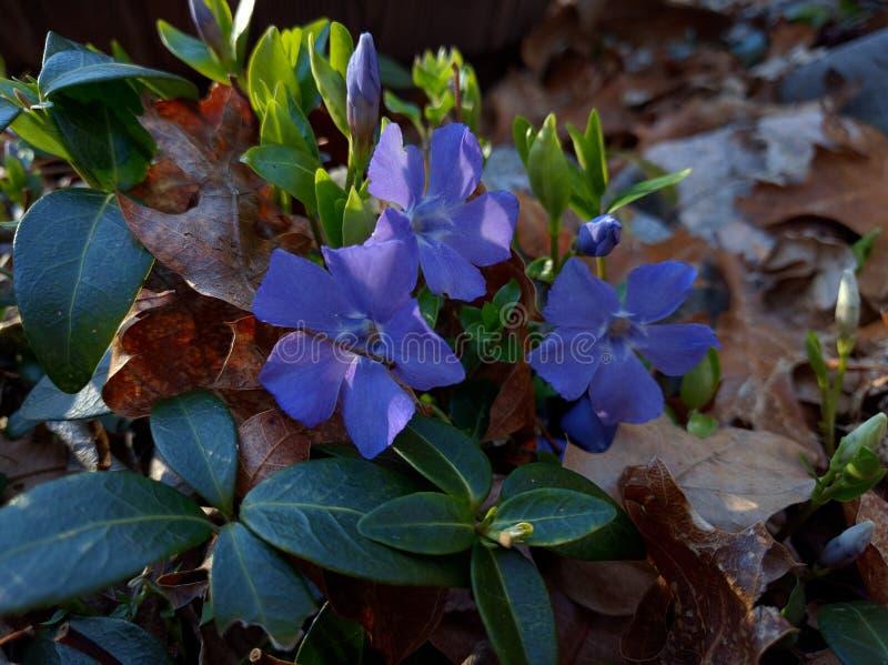Le jardin fleurit au printemps photos libres de droits