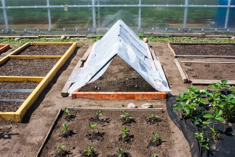 Le jardin s'est divisé en lits photographie stock