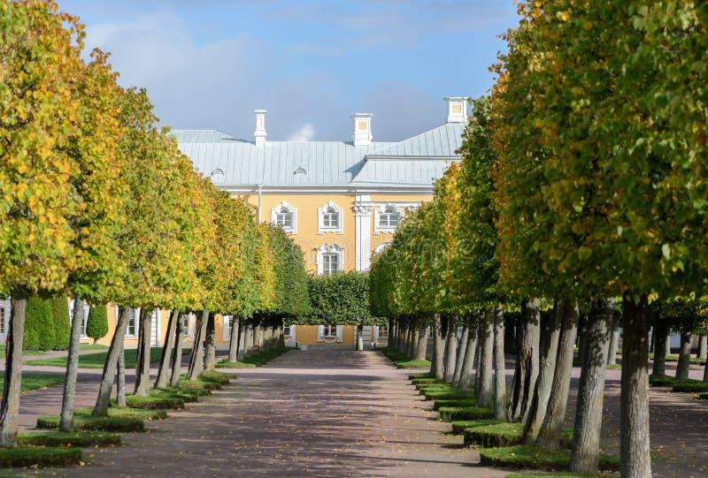 Le jardin supérieur de Peterhof est décoré d'une avenue verte de floraison de tilleul, qui pendant la saison d'automne devient un images libres de droits