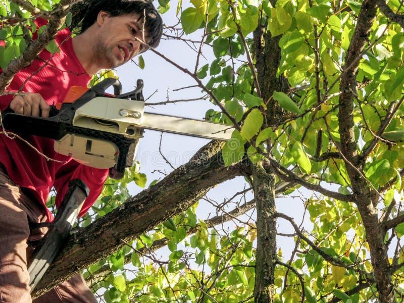 Le jardinier avec une tronçonneuse découpe des arbres fruitiers assis sur une branche Belle toile de fond pour l'entretien du jar image stock