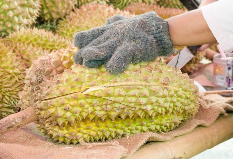 Le jardinier faisant le durian d'épluchage photo stock