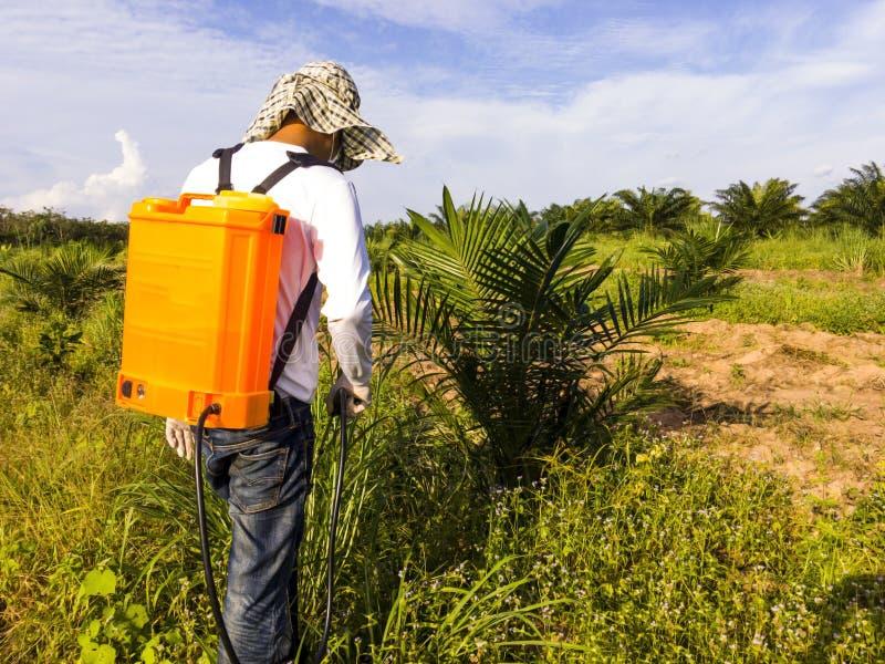 Le jardinier pulvérise des herbicides autour du jeune palmier t photographie stock libre de droits
