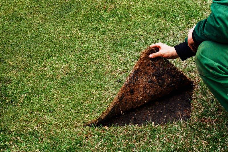 Le jardinier soul?ve la couture d'une pelouse avec l'herbe Concept : montrez le mauvais c?t? images libres de droits