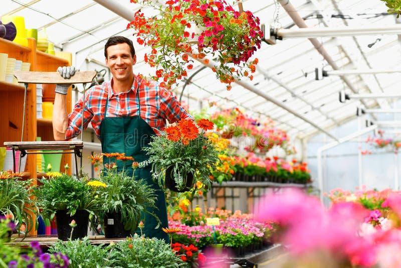 Le jardinier travaille en serre chaude d'un fleuriste photo libre de droits