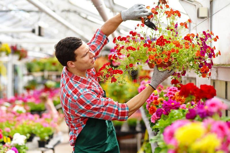 Le jardinier travaille en serre chaude d'un fleuriste photographie stock libre de droits