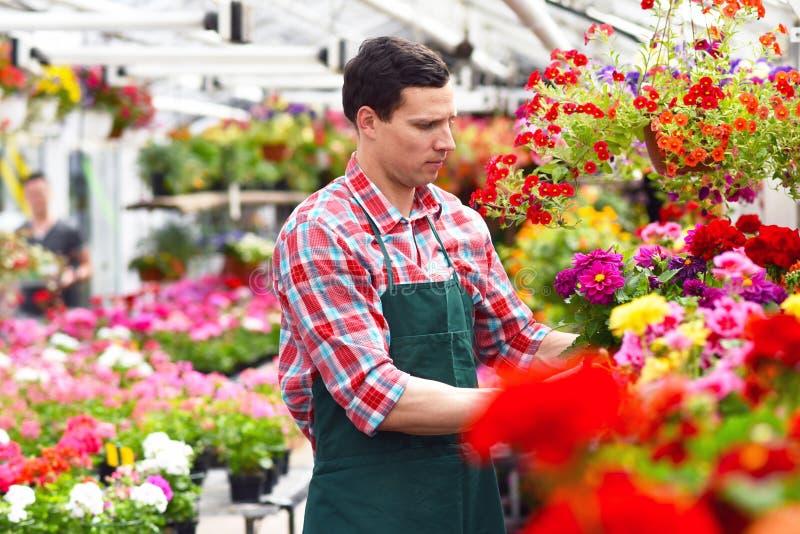 Le jardinier travaille en serre chaude d'un fleuriste image stock