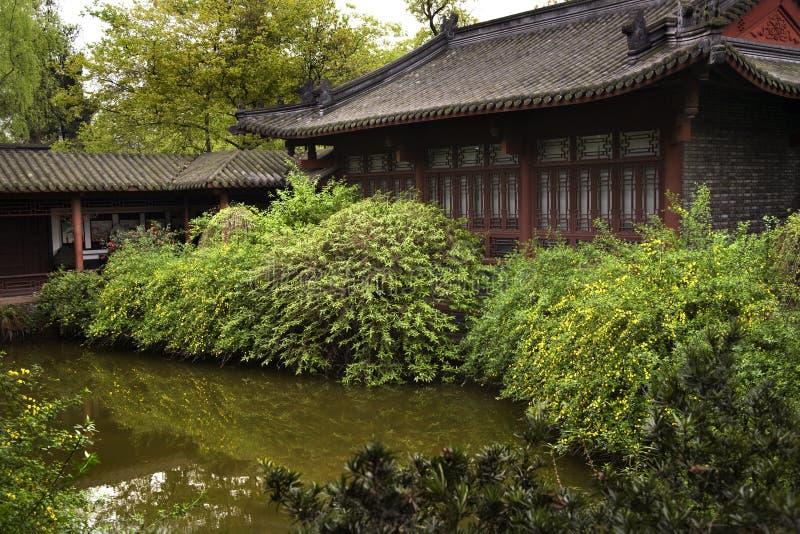 Le jaune chinois de jardin fleurit Sichuan Chine images stock
