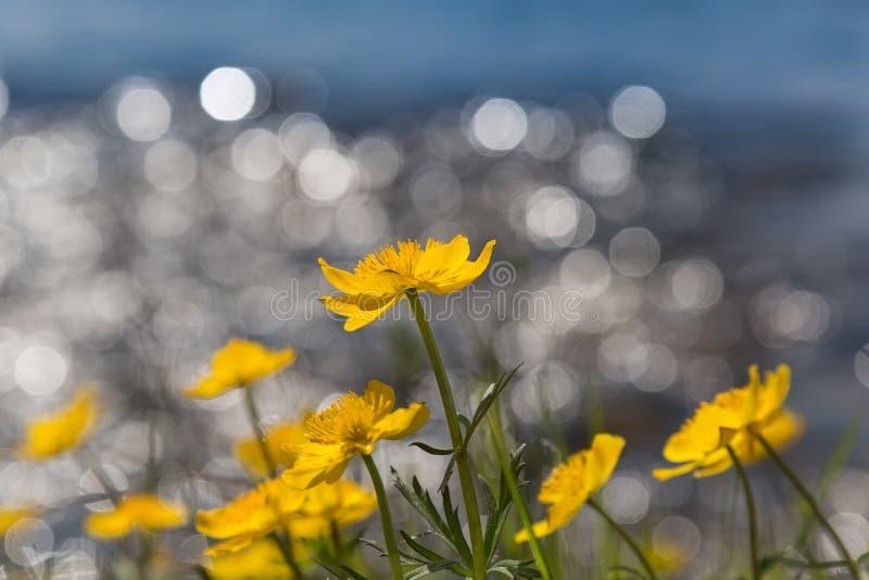 Download Le Jaune Fleurit Le Bokeh De Wiith Photo stock - Image du fond, coloré: 76087442