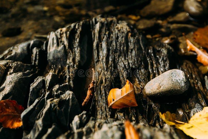 Le jaune part sur la surface d'une rivière de montagne photo stock