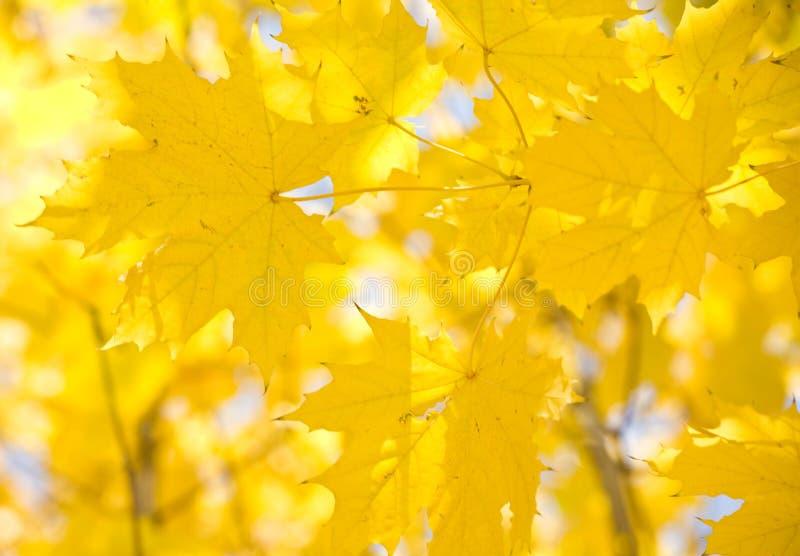 Le jaune part sur un fond du ciel image libre de droits