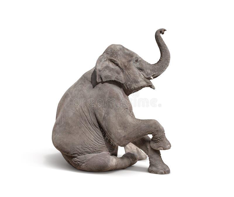 le jeune éléphant de bébé s'asseyent à l'exposition d'isolement sur le backgroun blanc images stock