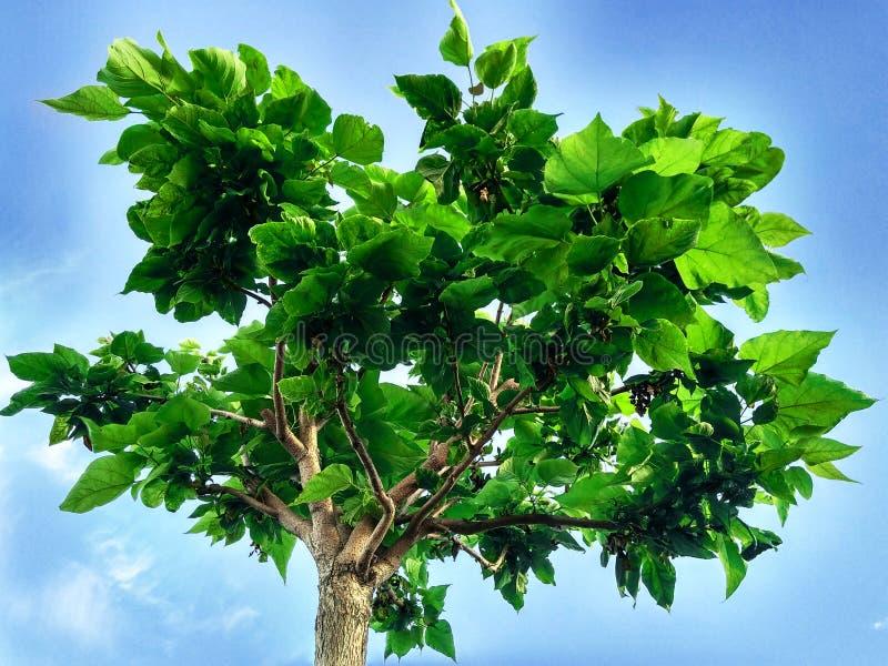 Le jeune arbre images stock