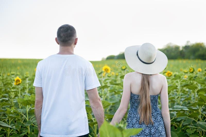 Le jeune beau couple se tient tenant des mains contre le champ vert des tournesols de floraison Vue arrière photos stock