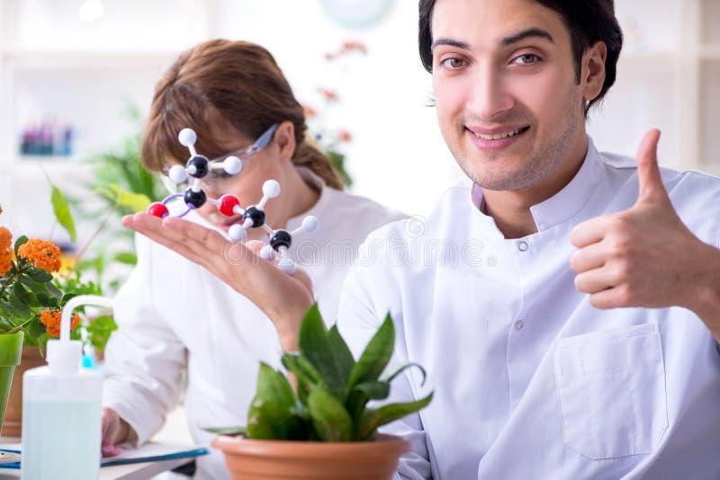 Le le jeune botaniste deux travaillant dans le laboratoire images stock
