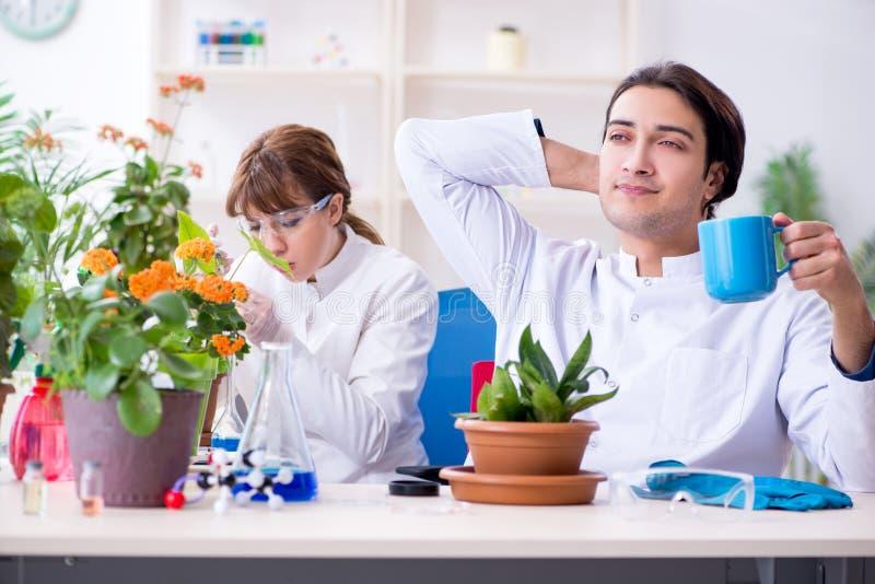 Le le jeune botaniste deux travaillant dans le laboratoire images libres de droits