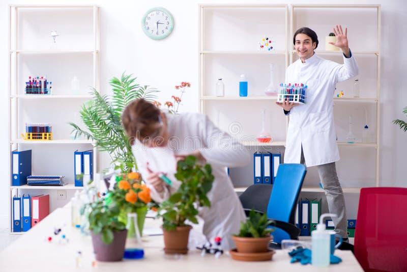 Le le jeune botaniste deux travaillant dans le laboratoire photo stock