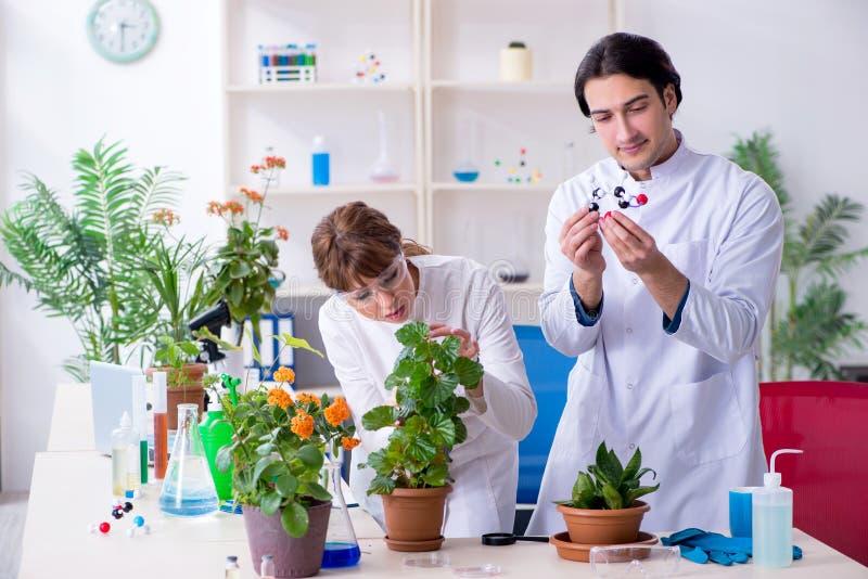 Le le jeune botaniste deux travaillant dans le laboratoire photo libre de droits