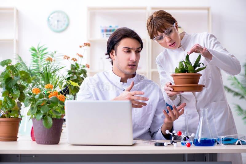 Le le jeune botaniste deux travaillant dans le laboratoire image libre de droits