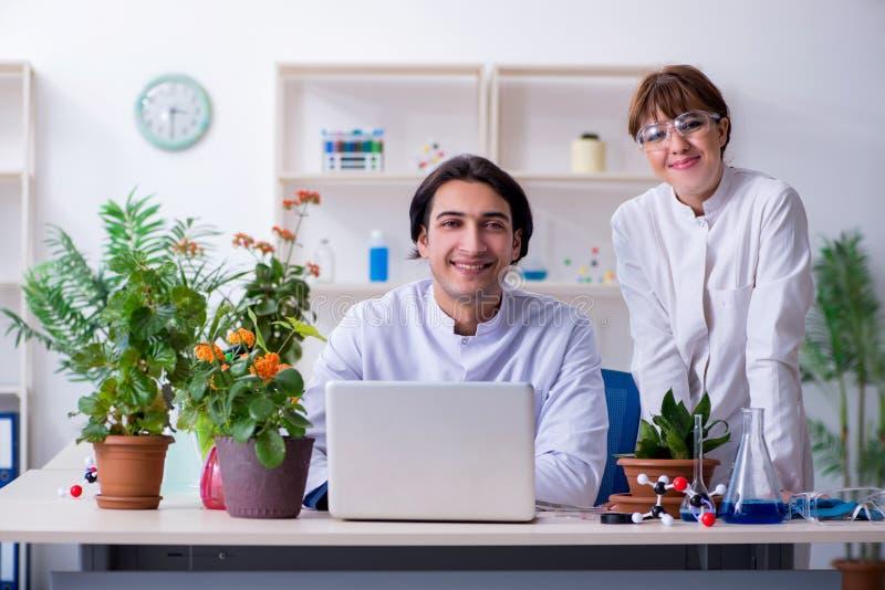Le le jeune botaniste deux travaillant dans le laboratoire photos libres de droits
