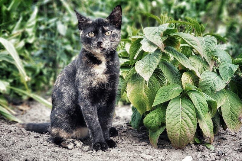Le jeune chaton regarde la lentille, attendant dans le jardin parmi les feuilles vertes photographie stock libre de droits