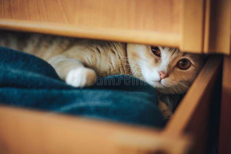 Le jeune chaton s'est ferm? dans une bo?te et jou? photos stock