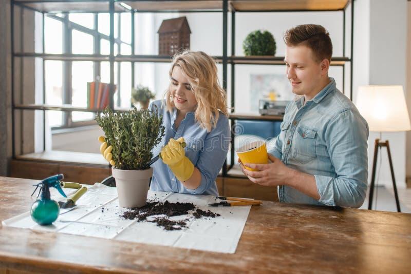 Le jeune couple change le sol aux usines à la maison image libre de droits