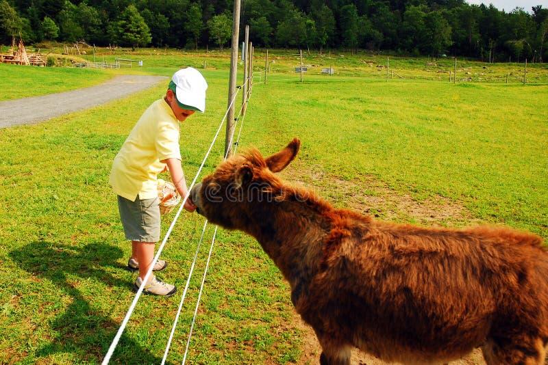 Le jeune garçon alimente un âne photographie stock libre de droits
