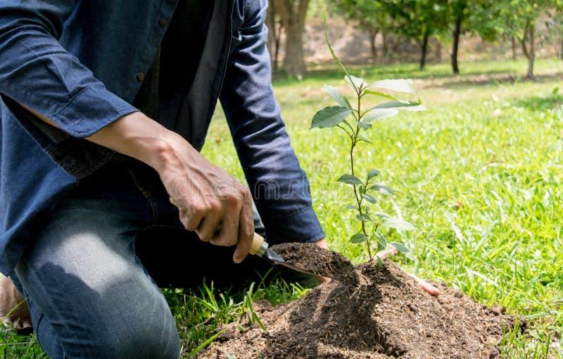 Le jeune homme avait l'habitude Siem pour creuser le sol pour planter des arbres dans son arri?re-cour au cours de la journ?e photographie stock