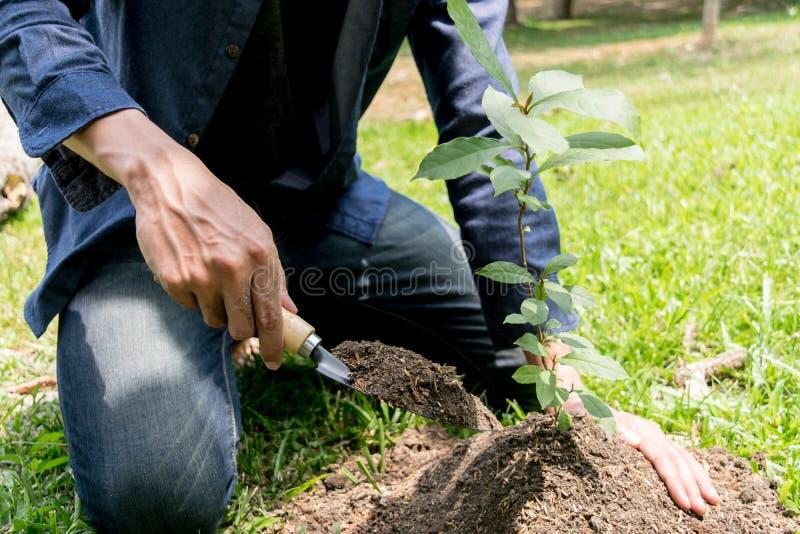 Le jeune homme avait l'habitude Siem pour creuser le sol pour planter des arbres dans son arri?re-cour au cours de la journ?e photo stock