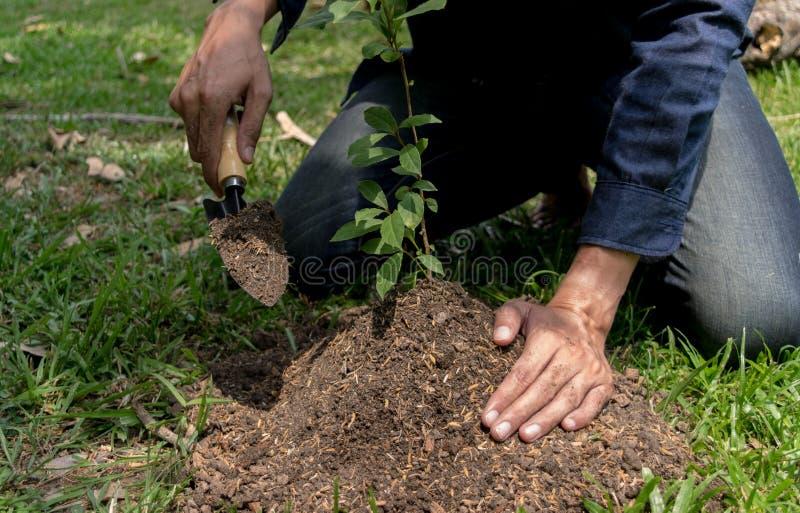 Le jeune homme avait l'habitude Siem pour creuser le sol pour planter des arbres dans son arri?re-cour au cours de la journ?e image stock