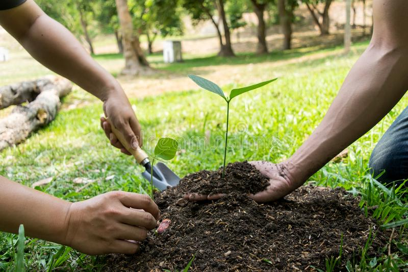 Le jeune homme avait l'habitude Siem pour creuser le sol pour planter des arbres dans son arri?re-cour au cours de la journ?e image libre de droits