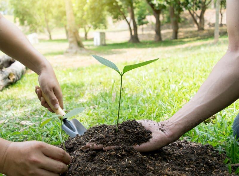 Le jeune homme avait l'habitude Siem pour creuser le sol pour planter des arbres dans son arri?re-cour au cours de la journ?e photographie stock libre de droits