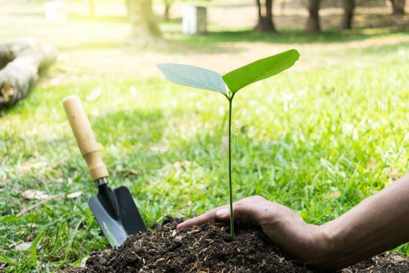 Le jeune homme avait l'habitude Siem pour creuser le sol pour planter des arbres dans son arri?re-cour au cours de la journ?e photos libres de droits