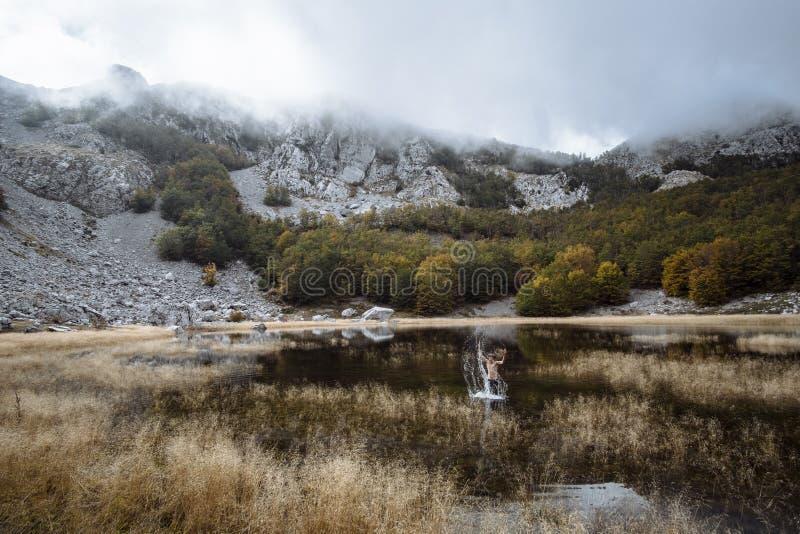 Le jeune homme de sports a durci dans le lac, Montanegro photographie stock libre de droits