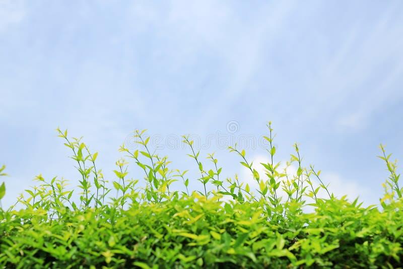 Le jeune laisse l'arbre de mur de décoration avec le vent sur le fond de ciel bleu images stock