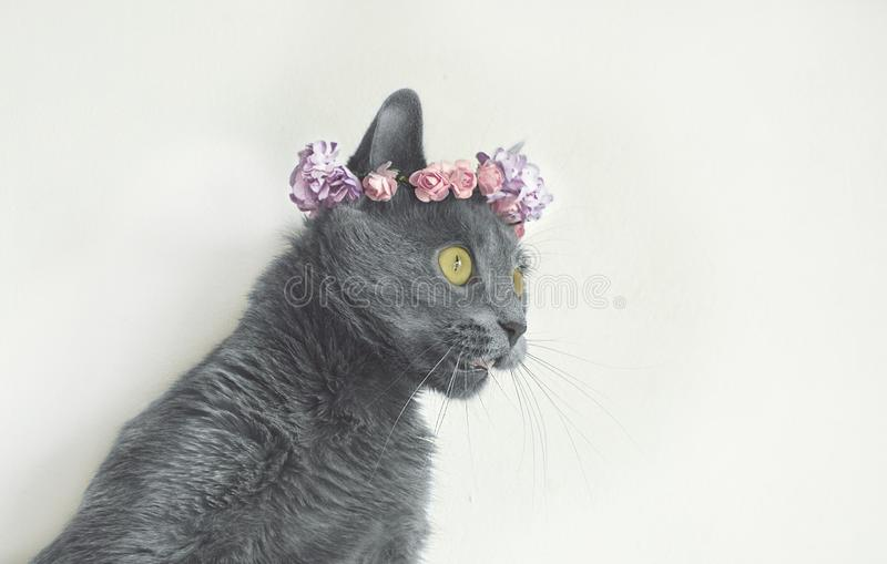 Le jeune minou gris de portrait dans des fleurs tressent photos libres de droits