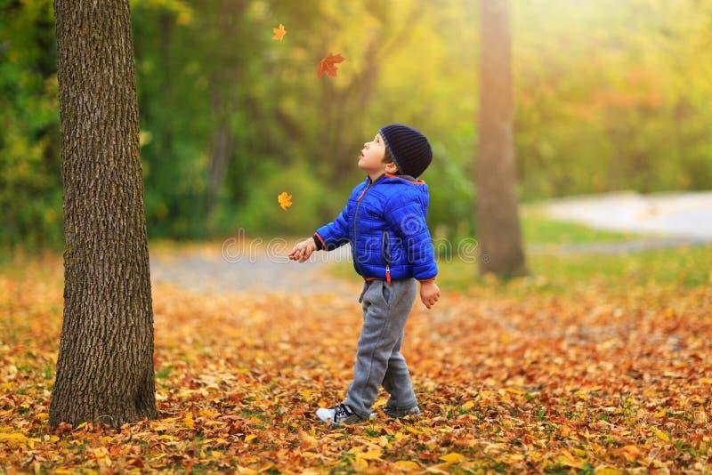 Le joli garçon recueille une feuille d'or de chute sur le fond de coloré photos libres de droits
